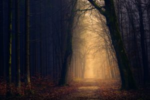 dark woods in the fall with. a brightly lit path